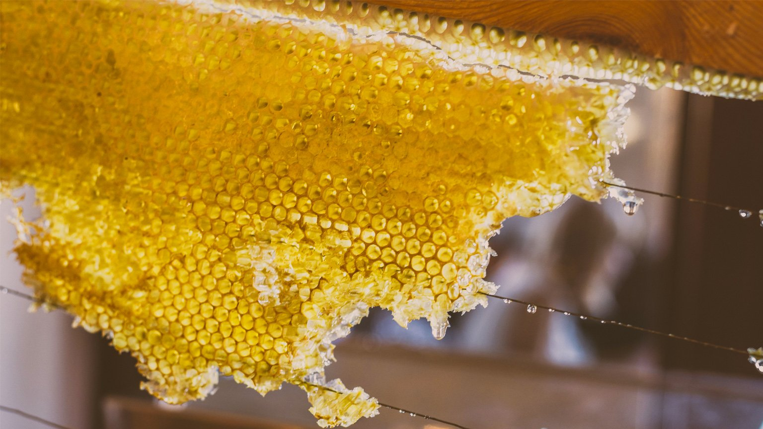 The World of Food: Honey