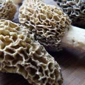 Carpaccio di Kona ai funghi selvaggi e chiacchere salate