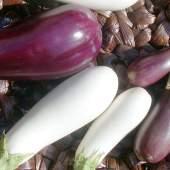 Caspian Eggplant