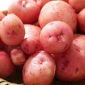 Garlic Potato Salad