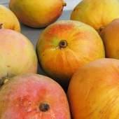 Mango Flan