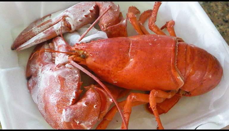 "Petite Lobster ""BLT"""