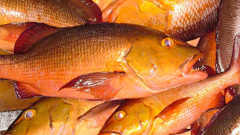 Thai Red Snapper